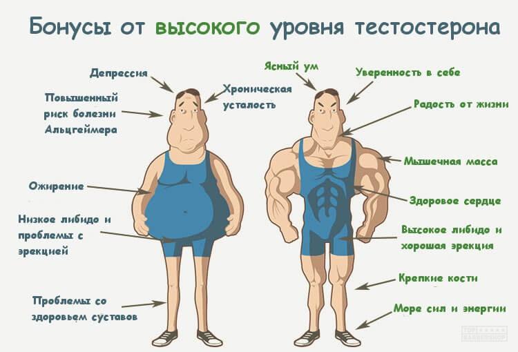 Тестостерон показатели